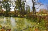 Autumn scene on bog — Stockfoto