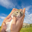 Funny rat in hands — Stock Photo