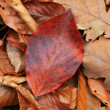 Foto Stock: Dry autumn leafage