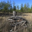 Stock Photo: Old wood in forest