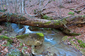 Old tree over mountain stream — Stock Photo