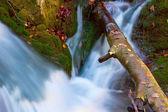Run of mountain stream — Stock Photo