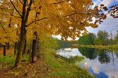 Autumn scene on river — Stock Photo