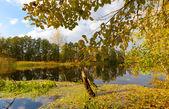 Autumn day on lake — Stock Photo