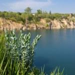 Green grass on lake background — Stock Photo #37610627