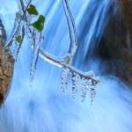 Frozen plant near waterfall — Stock Photo #38732267