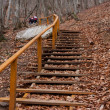 Stock Photo: Stairs in autumn forest
