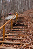 Stairs in autumn forest — Stock Photo