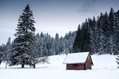 Wooden house in forest at winter time — Stok fotoğraf