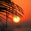 Sunset through palm brunch — Stock Photo