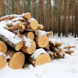 Foto Stock: Pine logs under snow