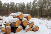 Forewood store in winter forest — Stock Photo