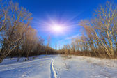 Pathway in winter forest — Stock Photo