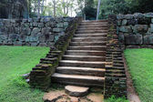 Old stairs in jungle — ストック写真