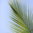 Palm brunch on sky background — Stock Photo #40627695