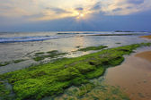 Green stones in sea — Photo