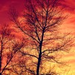 Stock Photo: Leafless tree's brunches on red sky background