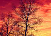 Leafless tree's brunches on red sky background — Stock Photo