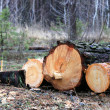Stock Photo: Pine logs