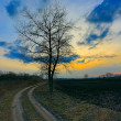 Stock Photo: Alone tree near dirt road