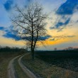 Alone tree near dirt road — Stock Photo #41514615