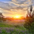 Stock Photo: Sunset over meadow