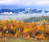 Autumn scene with mountains on background — Stock Photo