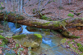 Old dead tree above stream — Zdjęcie stockowe
