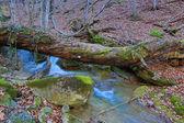 Old dead tree above stream — Foto de Stock