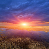 Sunset over spring meadow — Stock Photo
