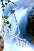 Frozen plant near waterfall — Stock Photo