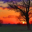 Old tree in steppe on sunset — Stock Photo
