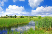 Summer scene on bog — Stockfoto