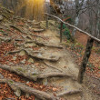Wooden stairs in autumn forest — Stock Photo #44779169
