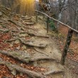 Wooden stairs in autumn forest — Stock Photo