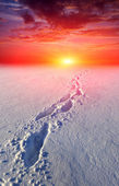 Path in steppe on sunset background — Stock Photo