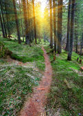 Pathway in forest — Stock Photo