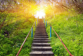 Stairs in spring forest  — Stock Photo