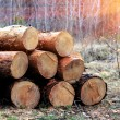 Wooden logs in forest — Stock Photo #46693433
