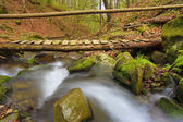 Wooden bridge over stream — Stock Photo