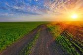 Rut road on green field on sunset — Stock Photo
