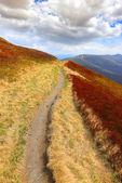 Caminho entre prado agradável nas montanhas — Fotografia Stock