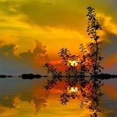 Tree' brunches on sunset background — Stock Photo
