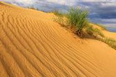 Bush on sands — Stock Photo
