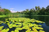 Summer on lake — Stock Photo