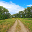 Rut road in summer forest — Stock Photo #49013785