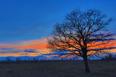 Tree on meadow after sunset — Stock Photo