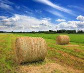Field with hay rolls at summer time — Stock Photo