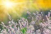 Summer meadow with wild flowers — Stock Photo