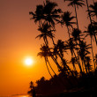 Beautiful tropical sunset — Stock Photo #12302700